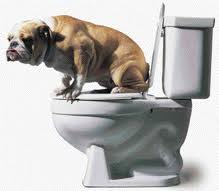 Potty trained dogs rock!